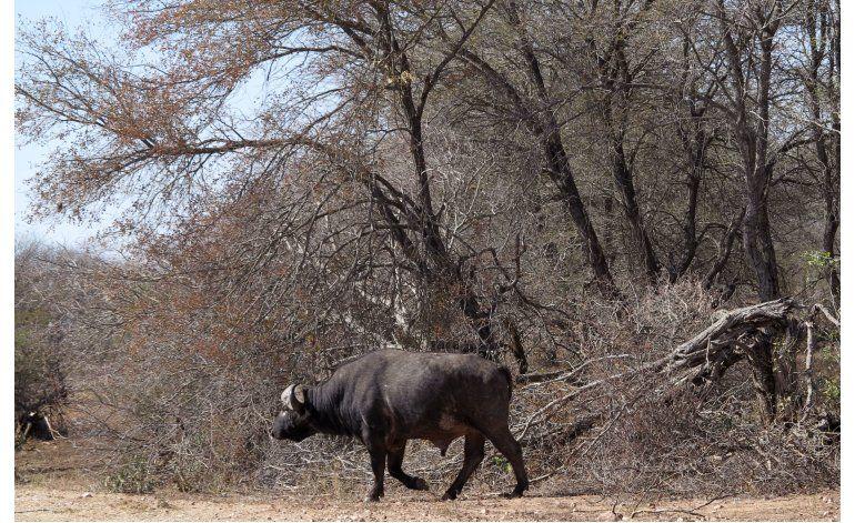 Parque sudafricano sacrifica a 350 animales por grave sequía