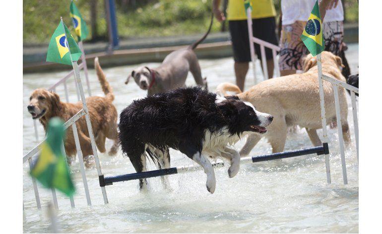 Celebran Juegos Olímpicos para Perros en Río de Janeiro