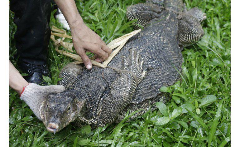 Bangkok empieza a despejar un parque de grandes reptiles