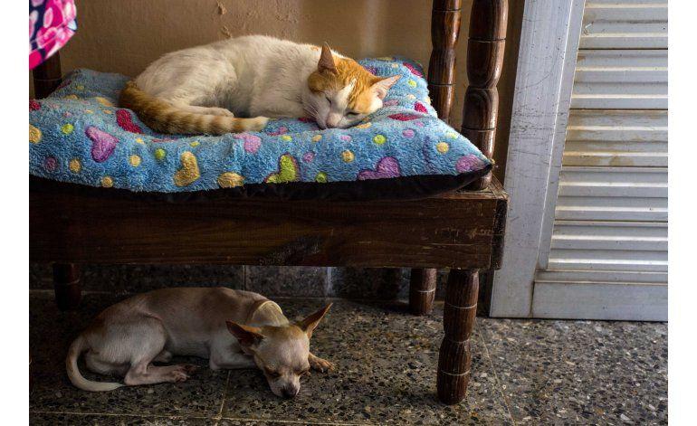 Cuba muestra un especial interés por los perros de lujo