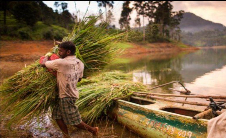 El sorprendente caso que demuestra que América Latina también puede librarse de la malaria