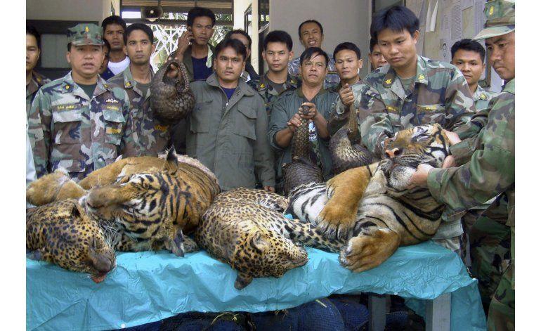 Laos promete acabar con granjas de tigres
