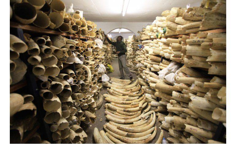 La lucha mundial contra tráfico de marfil aún insuficiente