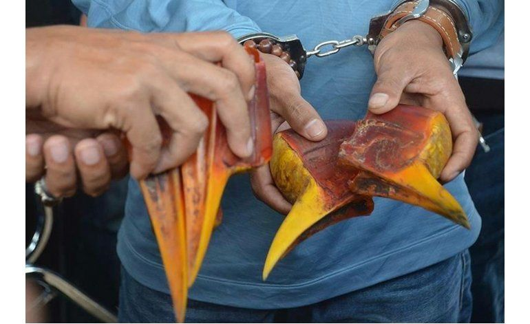Furtivos buscan pico de ave rara en sureste asiático