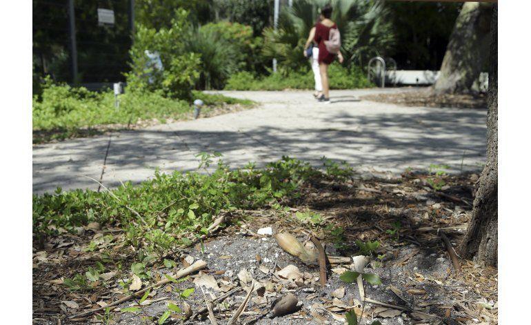 La conexión de plantas y zika abre un debate en Miami Beach