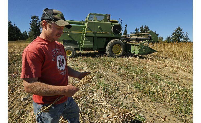 Estadounidenses empiezan a cultivar quinua