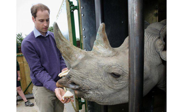 Dos rinocerontes negros en peligro de extinción dan a luz
