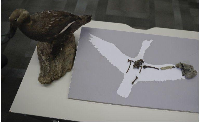 Ave de la prehistoria sonaba probablemente como pato