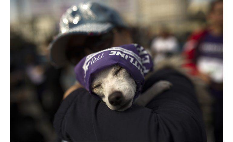 Madrid: 3.500 perros y sus dueños marchan en 5to perrotón