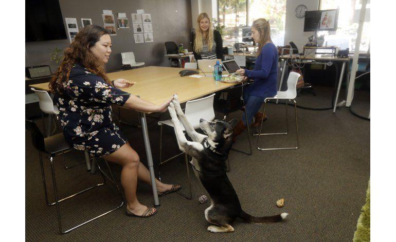 Mascotas en el trabajo: alegres... y problemáticas