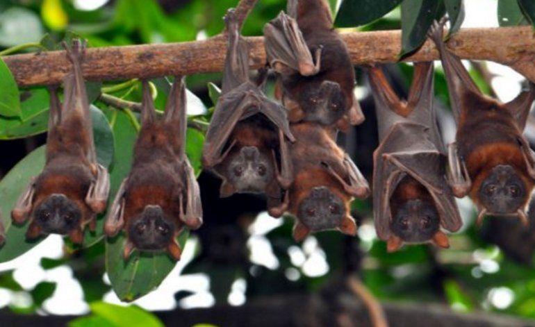 Miami Beach explora la posibilidad de utilizar murciélagos para combatir el virus del Zika