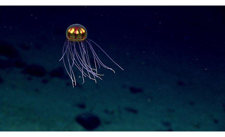 Profundidades marinas revelan criaturas extrañas y salvajes