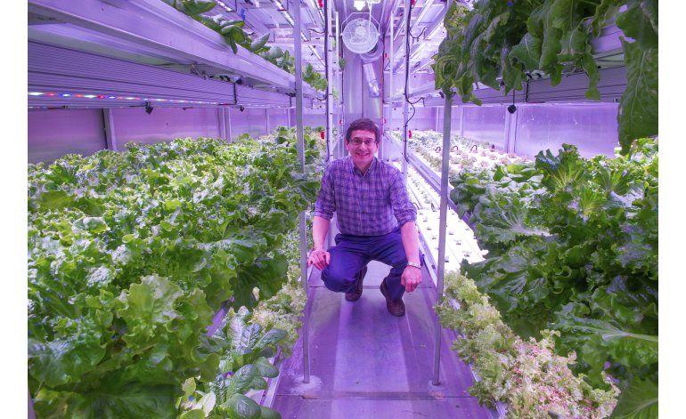 Se las ingenian para cultivar hortalizas en el Artico