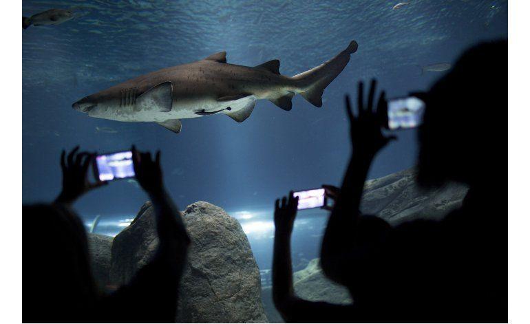Abrirán en Río el llamado acuario más grande de Sudamérica