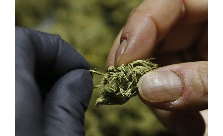 California, Massachusetts aprueban consumo de marihuana