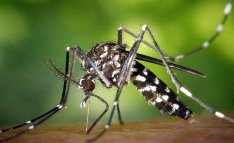 Alerta Zika: qué saber antes de que llegue el verano
