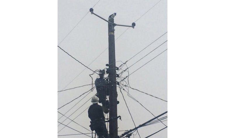 Gato es recatado tras nueve días en poste de electricidad