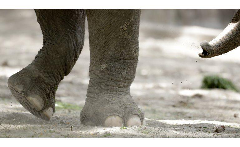 Argentina: elefantas buscan un mejor hábitat