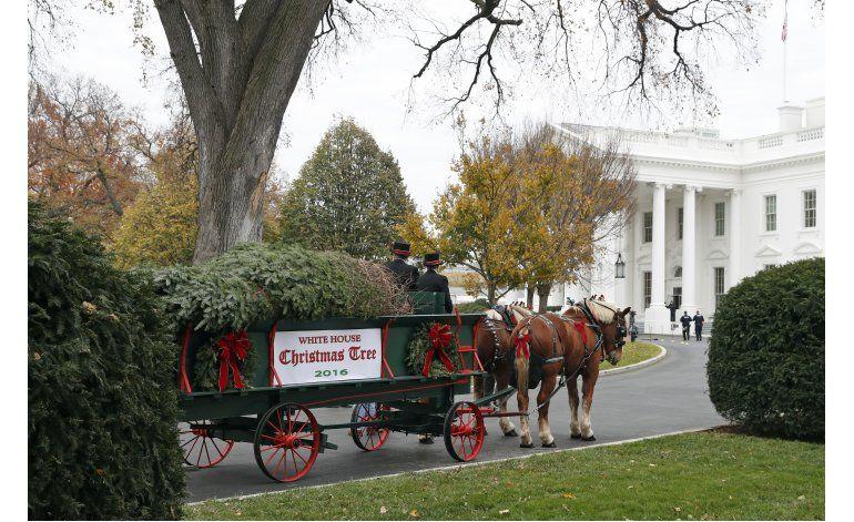 Michelle Obama recibe el árbol de Navidad de la Casa Blanca