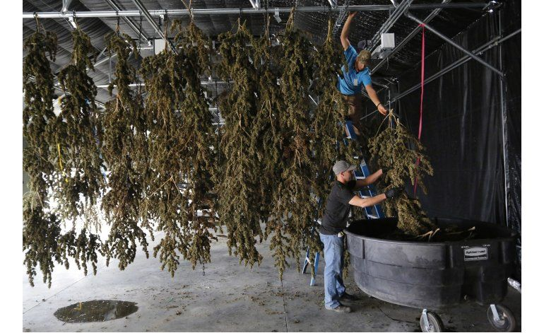 EEUU: El tren de la marihuana legal aún puede descarrilar