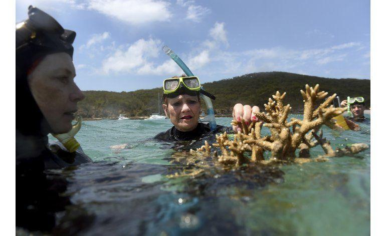 Récord de corales muertos en Gran Barrera de Coral