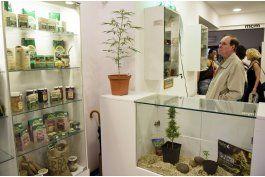 inauguran museo del cannabis en montevideo