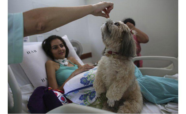 Perros ofrecen terapia en hospital brasileño