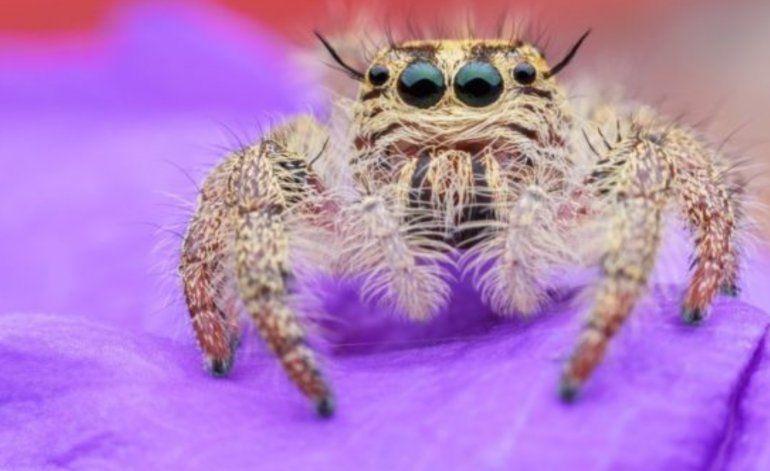 3 sorprendentes usos médicos de la seda de tela de araña