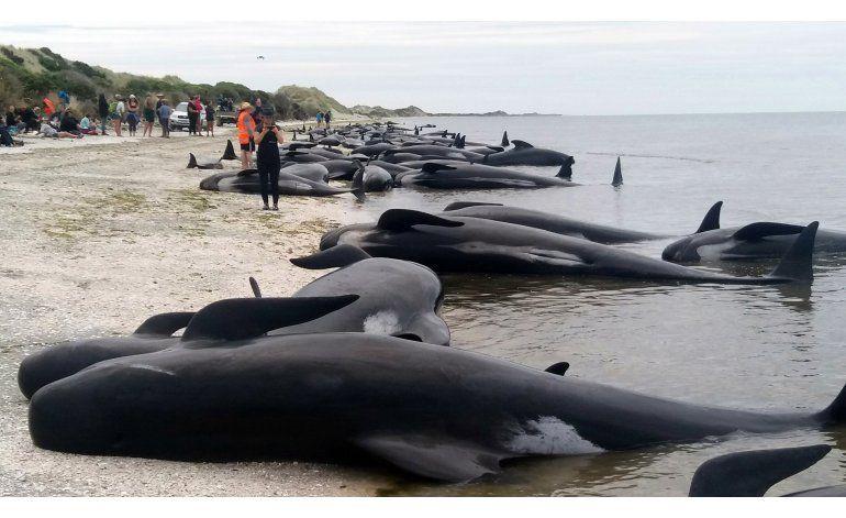 Reflotan a ballenas piloto que encallaron en Nueva Zelanda