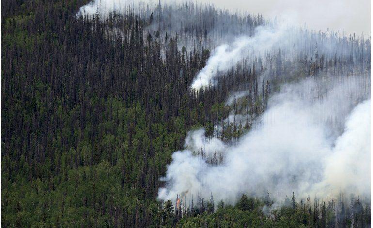 Colorado tiene 834 millones de árboles muertos
