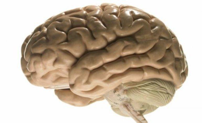 Por qué la ciencia necesita con urgencia tu cerebro