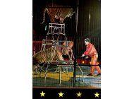 circo aclamado por dejar de usar animales los trae de vuelta