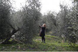 mala cosecha italiana hace subir precios de aceite de oliva