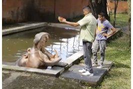 el hipopotamo gustavito muere tras golpiza en el salvador