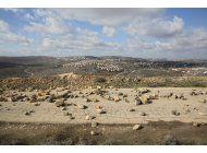 fuerzas israelies inician el desalojo de 9 casas de colonos