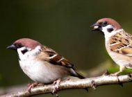 como ver aves cerca de tu casa puede mejorar tu salud mental