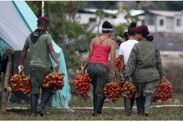 colombia: se inicia registro de armas de las farc