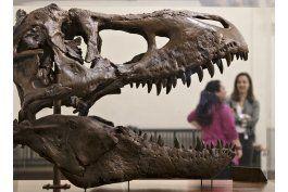 surge nueva hipotesis sobre evolucion de los dinosaurios