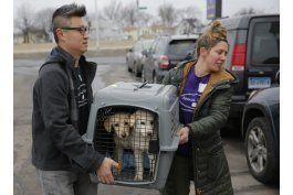 trasladan a ny a 46 perros rescatados de corea del sur