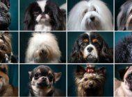 dalmatas, chihuahuas, galgos... la razon por la que hay tantas razas de perros en el planeta