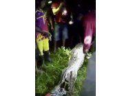 una serpiente piton se traga entero a un hombre en indonesia