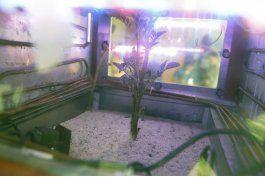 cientificos de peru experimentan para sembrar papas en marte