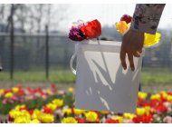 tulipanes holandeses dan vida a un campo en italia