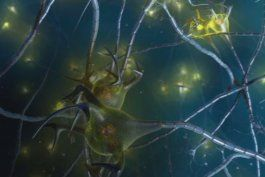 fda aprueba la primera medicina para detener la esclerosis multiple progresiva