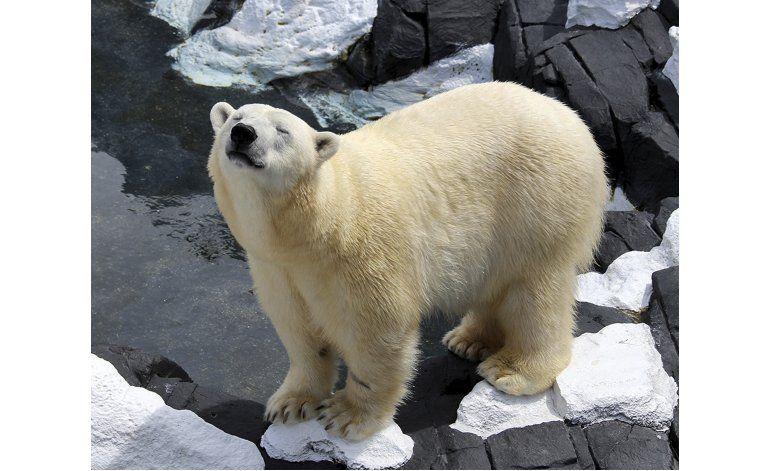 Osa polar fallece inesperadamente en San Diego