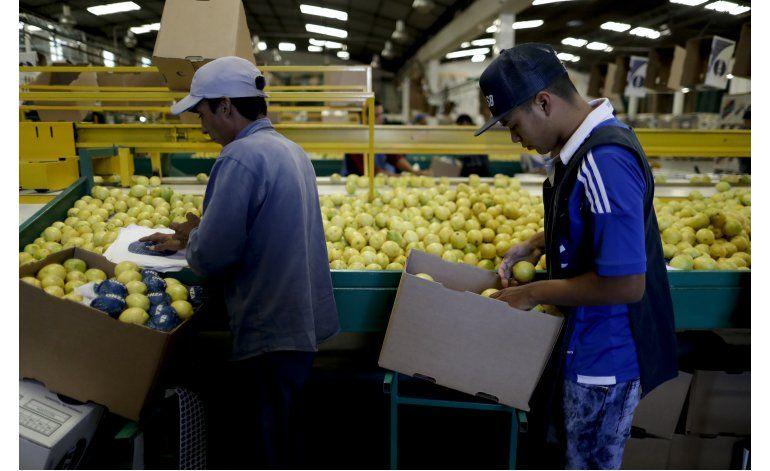 Limones argentinos luchan contra proteccionismo de Trump