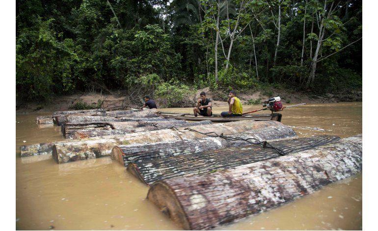 Retrocesos en la lucha contra tala ilegal de árboles en Perú