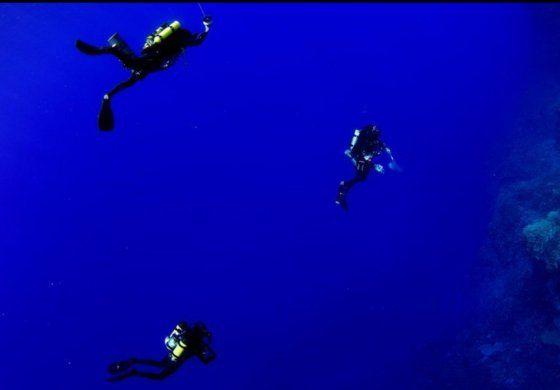 Las maravillosas nuevas especies descubiertas en la primera expedición a las aguas más profundas de la Isla de Pascua en Chile