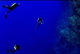 las maravillosas nuevas especies descubiertas en la primera expedicion a las aguas mas profundas de la isla de pascua en chile