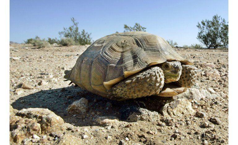 Tortugas mueren al tratar de reproducirse durante sequía